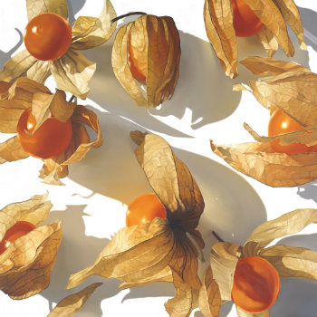 Oil painting - Physalis II