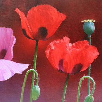 Oil painting - Poppies